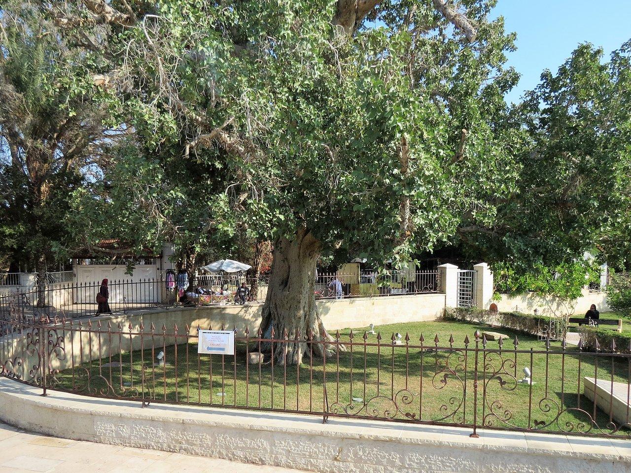 Church Of Zacchaeus